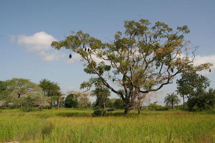 Los parques nacionales de Senegal   Revista Tu Gran Viaje. Reportajes, noticias de turismo, ofertas de viajes baratos