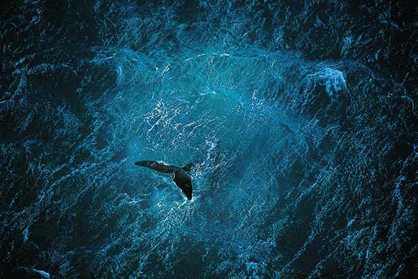 Planet-Ocean_COPYRIGHT-Yann-Arthus-Bertrand