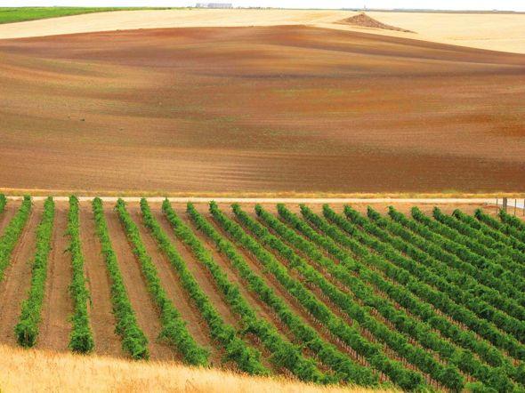 La Ruta del Vino de Rueda produce uno de los mejores vinos blancos del mundo