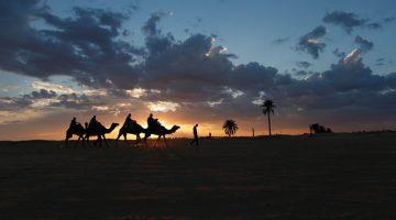 Camellos-en-desierto-Tunez