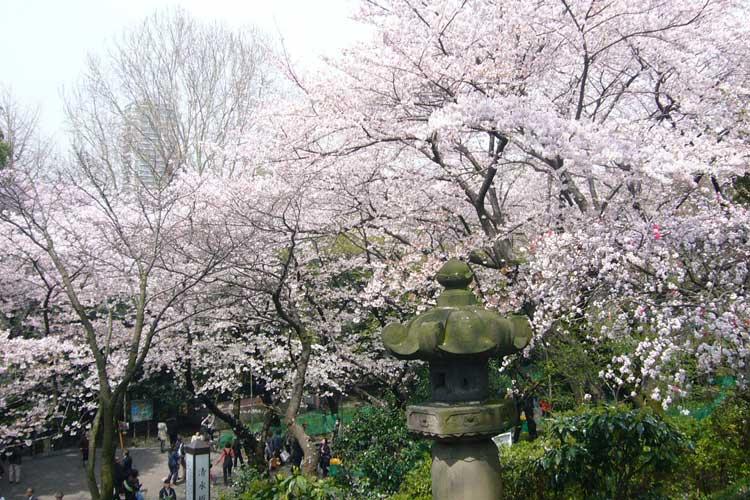 Parque Ueno. Hanami en Tokio. tu Gran Viaje