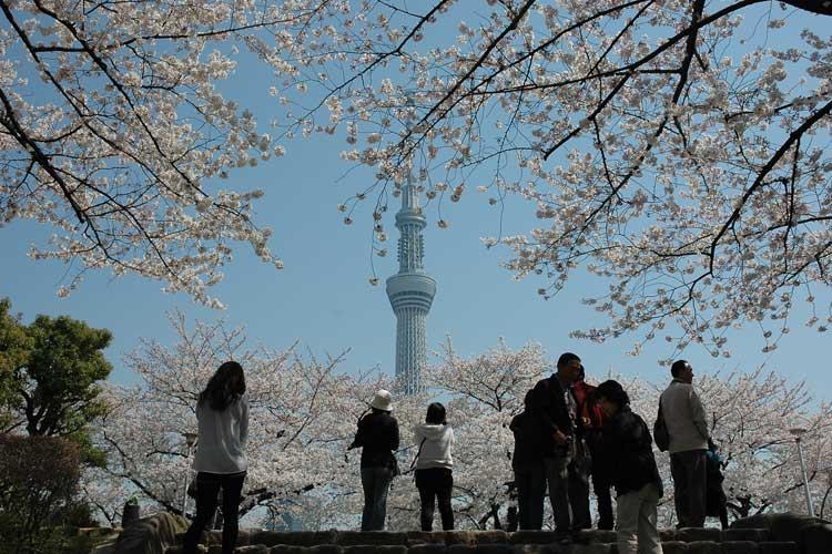 Hanami en Tokio. Tu Gran Viaje. Revista de Viajes y Turismo