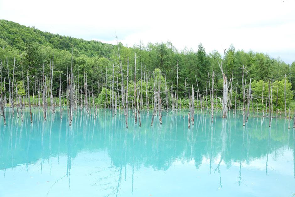 Hokkaido Aolike (Laguna Azul)
