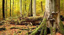 Parque Nacional de Hainich | Antiguos hayedos alemanes | Tu Gran Viaje