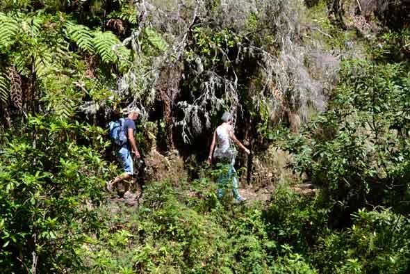 Senderismo en Madeira. Foto (c) Javier Olivares. Viajar a Madeira | Tu Gran Viaje revista de viajes y turismo