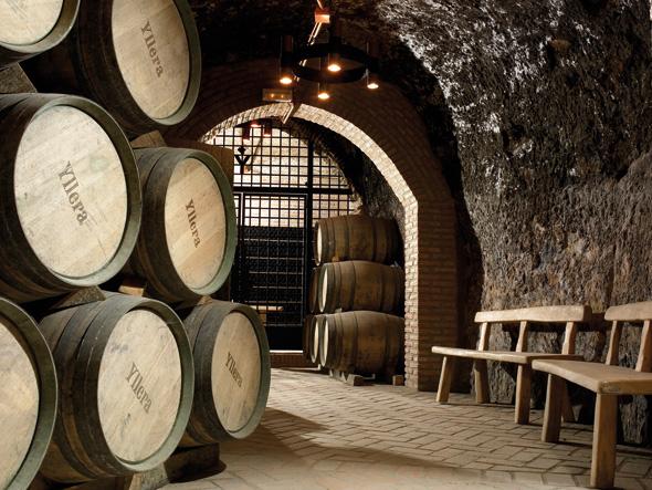 bodega yllera tu gran viaje por la ruta del vino de rueda