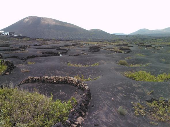 Vinos de Lanzarote. La Geria, Lanzarote. Foto Francisco Jódar