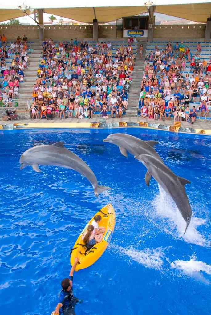 El Aqualand Costa Adeje es el único parque acuático con delfinario de las Islas Canarias.