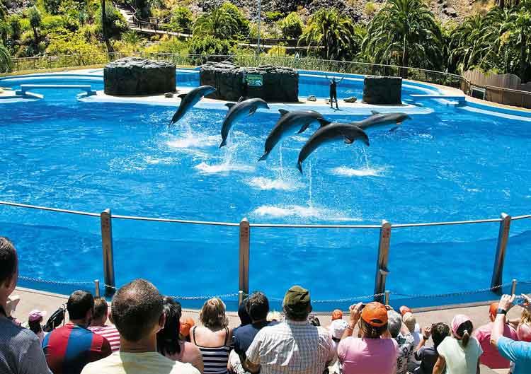 El Delfinario del Palmitos Park, en Gran Canaria, es uno de los más espectaculares de Europa.