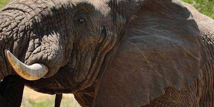 Elefante en el Parque Nacional Kruger | Tu Gran Viaje