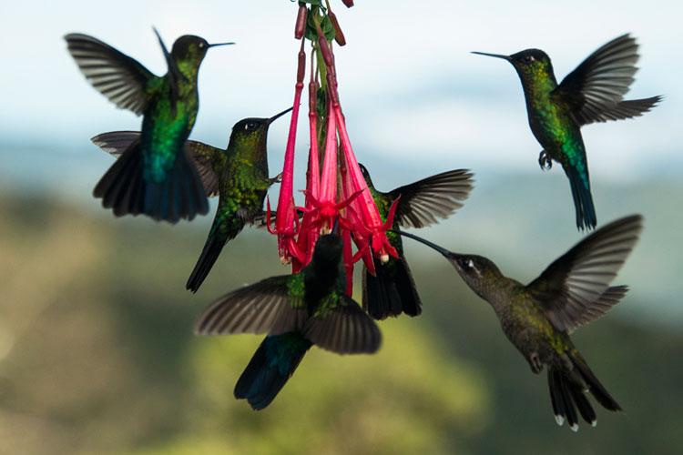 Ruta nacional de las aves de Costa Rica