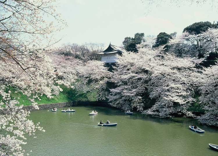 Foso Chidorigafachi. Hanami en Tokio. Tu Gran Viaje