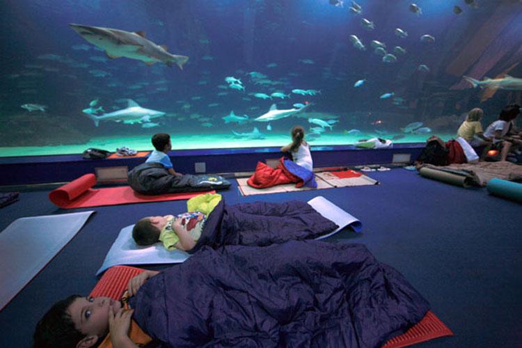 Dormir en un museo. Dormir en el Oceanográfic de Valencia. Tu Gran Viaje Revista de Viajes y Turismo