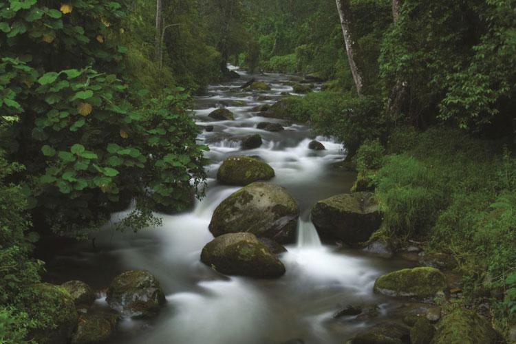 cuenca del río Savegre, Costa Rica | Tu Gran Viaje