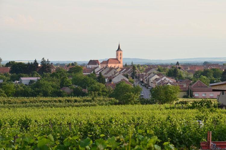 La vendimia en la República Checa | Revista Tu Gran Viaje