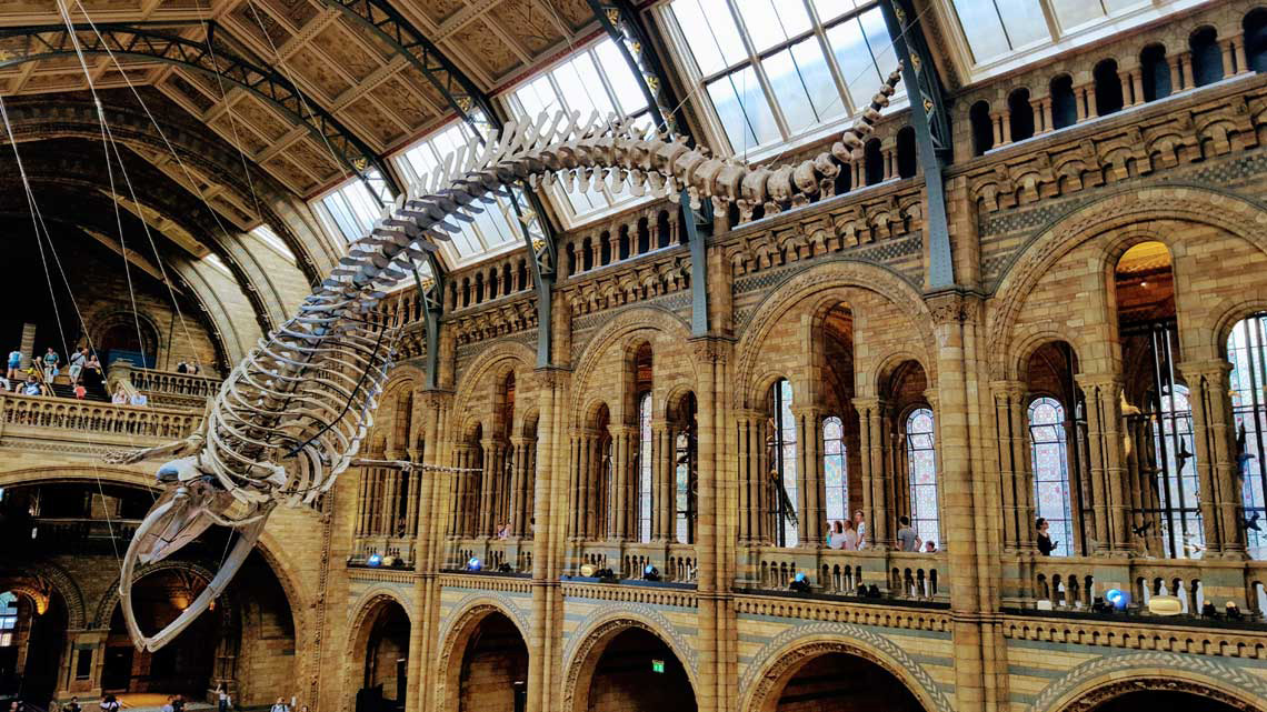 Hope, Natural History Museum of London © Tu Gran Viaje   Razones para viajar a Reino Unido en otoño   Revista Tu Gran Viaje editada por TGV Lab