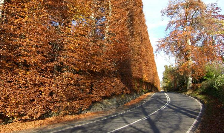 Meikleour Beech Hedge. La rotunda naturaleza de Escocia | Revista Tu Gran Viaje editada por TGV Lab