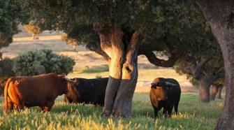 La ruta del Toro Bravo y la Dehesa salmantina | Tu Gran Viaje