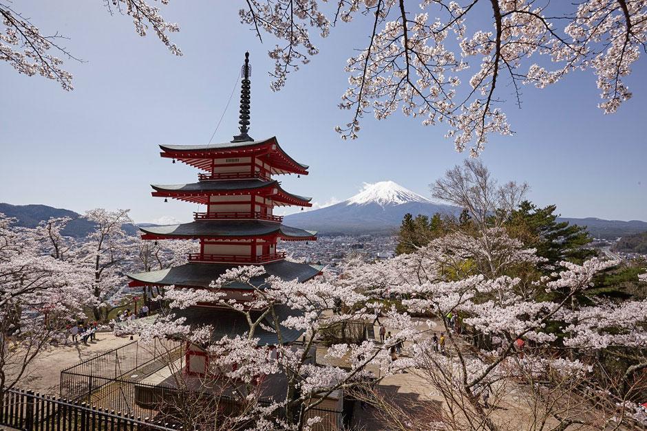 Hanami 2018 | Tu Gran Viaje | Foto © JNTO