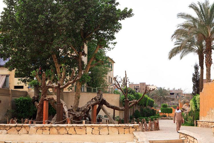 El árbol de la Vírgen María | Navidad en Egipto | Tu Gran Viaje