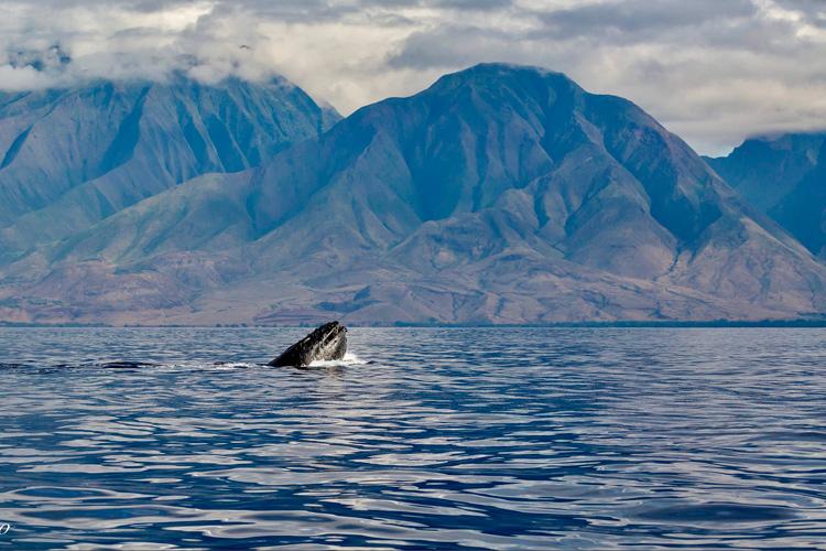 Ballenas en Maui. Foto CC 2.0 by WVTROUT | Naturaleza en las islas del Pacífico | Tu Gran Viaje