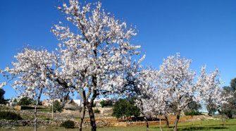 guia de viaje de ibiza en invierno de tu gran viaje-foto Xescu-Prats