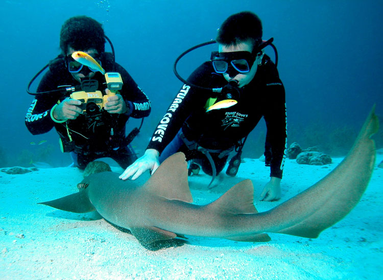 Bucear con tiburones en las islas Bahamas | Tu Gran Viaje