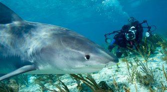 Nadar con tiburones en Bahamas | Tu Gran Viaje
